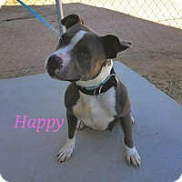 Adopt A Pet :: Happy - California City, CA