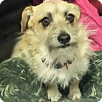 Adopt A Pet :: Brandie-True sweetie - Victorville, CA