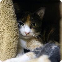 Adopt A Pet :: Dolce - Tucson, AZ