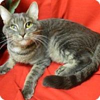 Adopt A Pet :: Carrie - Columbus, NE