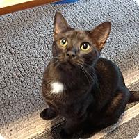 Adopt A Pet :: Bagheera - Smithfield, NC
