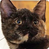 Adopt A Pet :: Bridget - Sprakers, NY