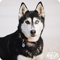 Adopt A Pet :: Ariel - Portland, OR