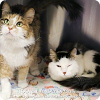 Adopt A Pet :: Tootsie * bonded with Morgan* - Appleton, WI