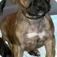 Adopt A Pet :: PETE (puppy #2) - Elyria, OH