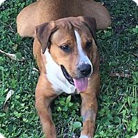 Adopt A Pet :: Tom Bones - Key Biscayne, FL