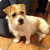 Adopt A Pet :: SADIE V - Scottsdale, AZ