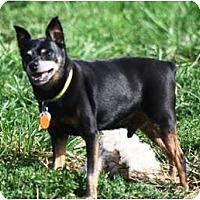 Adopt A Pet :: Frankie - Topeka, KS