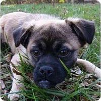 Adopt A Pet :: Bucky - Mocksville, NC