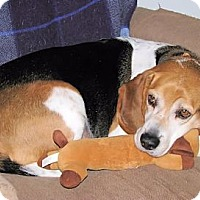 Adopt A Pet :: Rex - Novi, MI