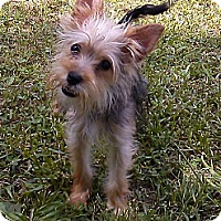 Adopt A Pet :: Kourtney*ADOPTION PENDING* - Hollis, ME