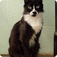 Adopt A Pet :: Dexter - Carencro, LA