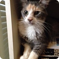 Adopt A Pet :: Charlotte - Philadelphia, PA