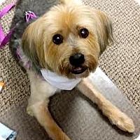 Adopt A Pet :: Trina - Minnetonka, MN