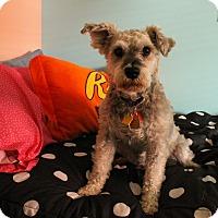 Adopt A Pet :: Murphy - Sharonville, OH