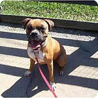Adopt A Pet :: Gulliver - Brentwood, TN