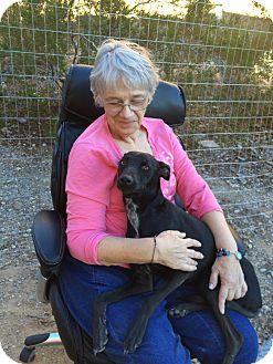 Whippet Dog Rescue Arizona