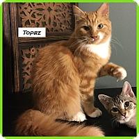 Adopt A Pet :: Topaz - Miami, FL