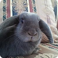 Adopt A Pet :: Skye - Watauga, TX
