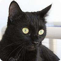 Adopt A Pet :: Anisette - Sarasota, FL