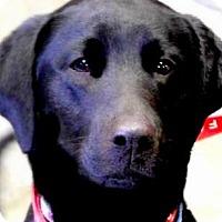 Adopt A Pet :: HENRY(A FAMILIES BEST FRIEND!! - Wakefield, RI