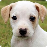 Adopt A Pet :: Buzz - Glastonbury, CT