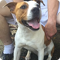 Adopt A Pet :: Jarvis - EDEN PRAIRIE, MN