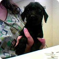 Adopt A Pet :: A273961 - Conroe, TX