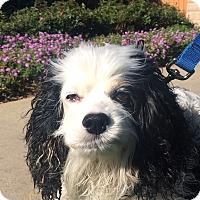 Adopt A Pet :: Katie - Santa Barbara, CA