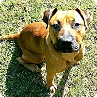 Adopt A Pet :: Piper - Athens, GA