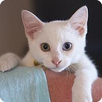 Adopt A Pet :: Daenerys - Sioux Falls, SD
