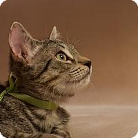 Adopt A Pet :: Haley - Columbus, OH