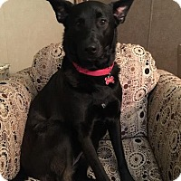 German Shepherd Dog Dog for adoption in Quincy, Indiana - Hope