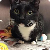 Adopt A Pet :: Mariposa - Janesville, WI