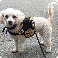 Adopt A Pet :: Mop - adoption pending - Gig Harbor, WA