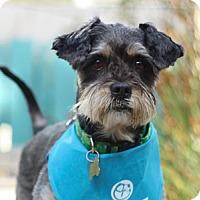 Adopt A Pet :: Grandpa - Pacific Grove, CA