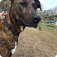 Adopt A Pet :: Gracie - Shinnston, WV