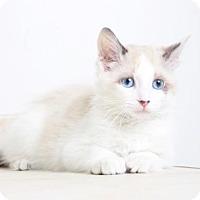 Adopt A Pet :: Roger C160390: NO LONGER ACCEPTING APPLICATIONS - Edina, MN