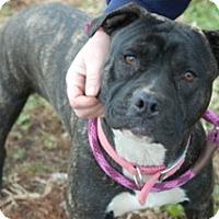 Adopt A Pet :: Kobe - Martinsville, IN