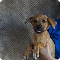 Adopt A Pet :: Twinkle - Oviedo, FL