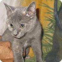 Adopt A Pet :: Dusty (Has Application) - Washington, DC