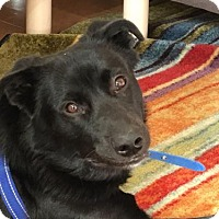 Adopt A Pet :: Sandor - Rockville, MD