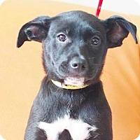 Adopt A Pet :: Sonna - San Ramon, CA