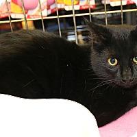 Adopt A Pet :: Alti - Rochester, MN