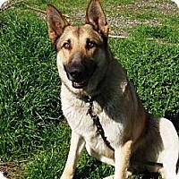 Adopt A Pet :: Milo - Pleasant Grove, CA