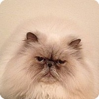 Adopt A Pet :: Nuggles - Davis, CA