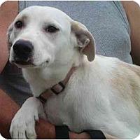 Adopt A Pet :: Blanca - Floresville, TX