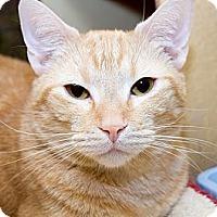 Adopt A Pet :: Beau - Irvine, CA