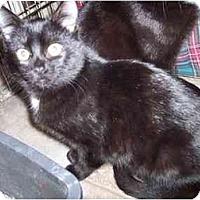 Adopt A Pet :: Gigi - Delmont, PA