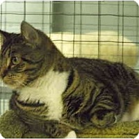 Adopt A Pet :: Maggie - Mission, BC